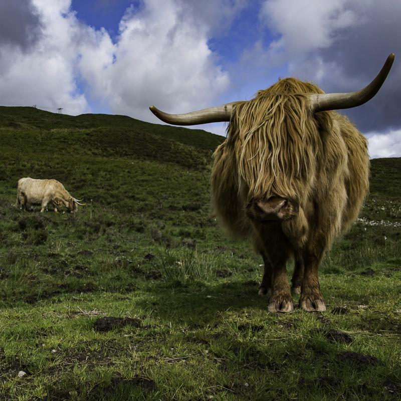 Scozia - Bellissimo Highlander a Skye