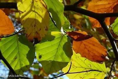 Herbst; Foto:  Rudi Franck