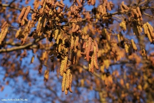 Herbst; Foto: Melanie Maise