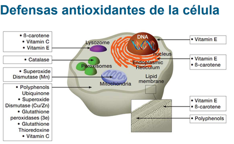 Antioxidantes: Una natural perspectiva