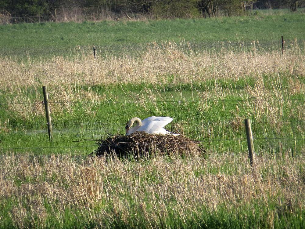 Ein Nest wie eine Burg