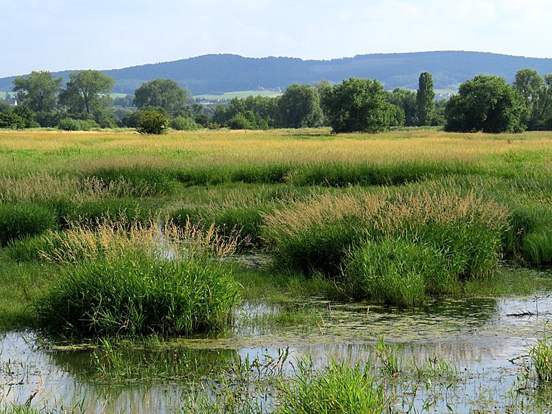 Diese überfluteten Wiesen sind der Lebensraum der Bekassine