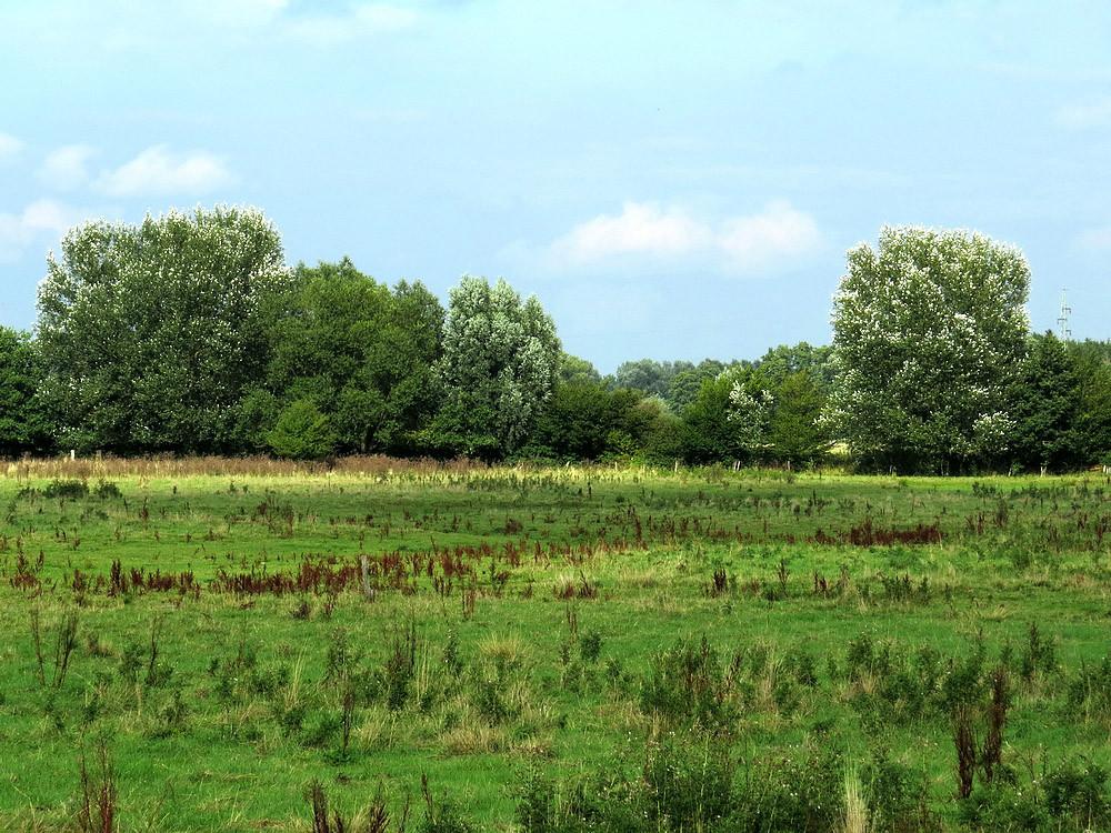 Amtmannsche Wiesen: Sturm beutelt die Büsche