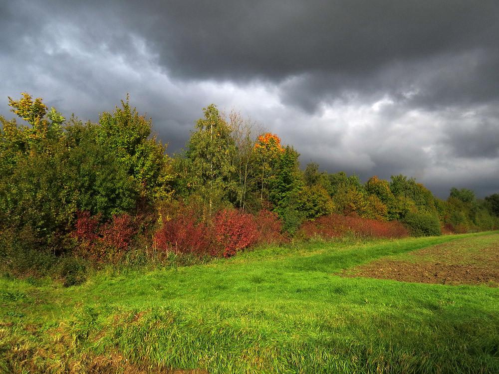 Herbstliche Färbung in der Niederung