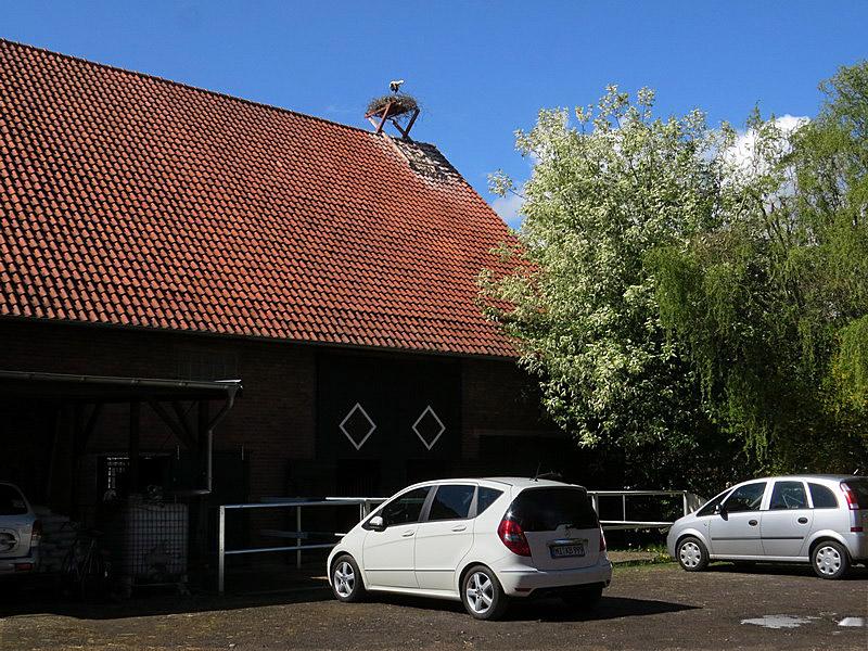 """Auf dem Reiterhof """"von Storch"""" wird der neue Horst erstmalig besetzt"""