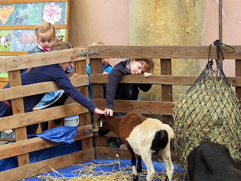Die Kinder hatten ihren Spaß. Die Schafe auch?