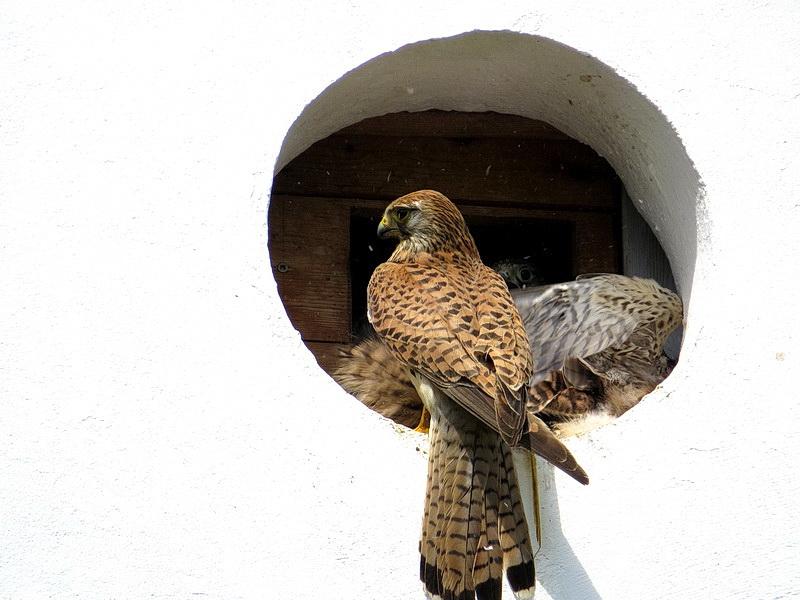 Und hier sitzt die Mama vor dem Nest