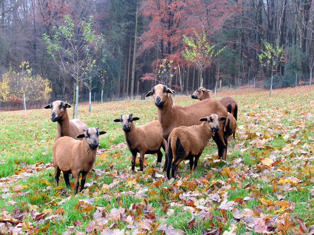 Unsere Öko-Rasenmäher auf der herbstlichen Novemberwiese