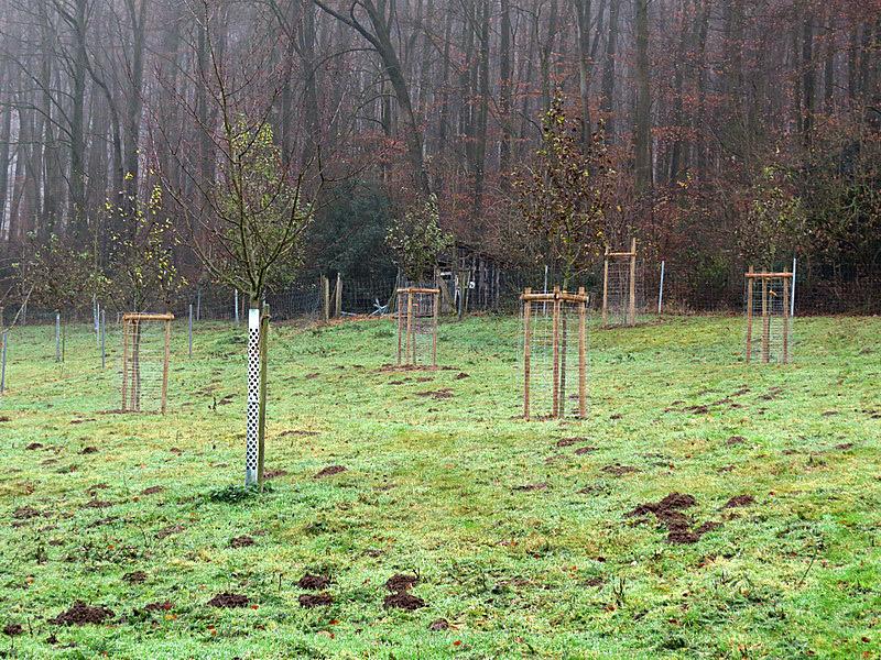Ein Fraß-Schutz umgibt die noch kleinen Bäume