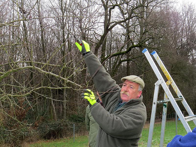 Erreichbare überflüssige Zweige werden vom Boden aus geschnitten.