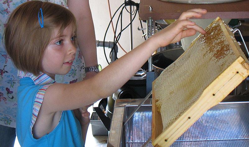 Der Honig kann jetzt schon probiert werden: Einfach den Finger nehmen