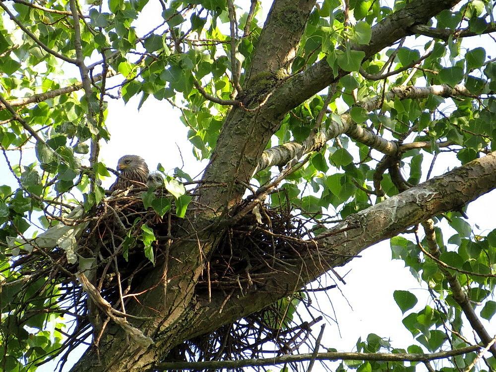 Der Muttervogel mit einem Küken
