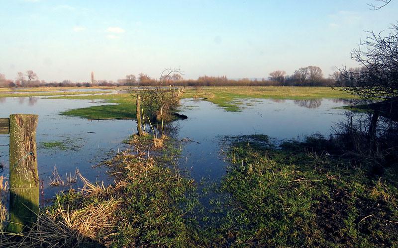 Die Amtmannschen Wiesen: Mit den Wasserflächen ein wichtiges Rastgebiet während des Vogelzuges im Frühjahr