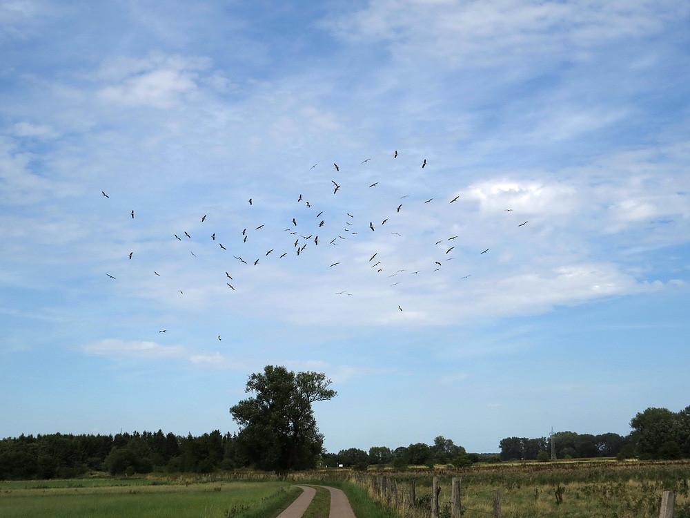 Ab August/September beginnt der Vogelzug nach Süden.