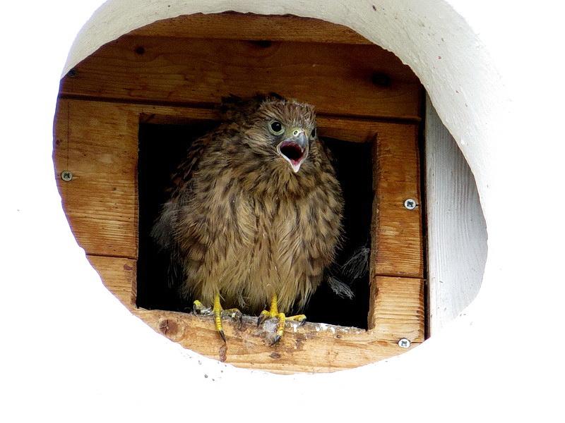 Die Jungvögel sind schon relativ groß