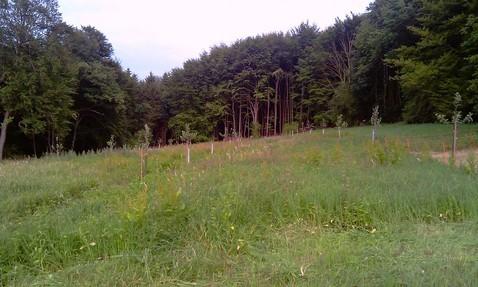 Die Streuobstwiese mit den ersten Pflanzungen im Frühjahr 2010