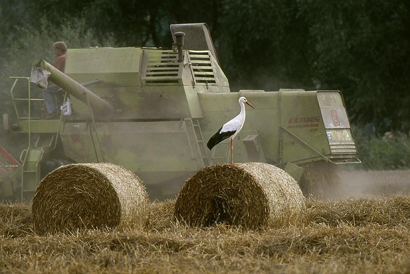 Erntemaschinen sind willkommene Jagdhelfer