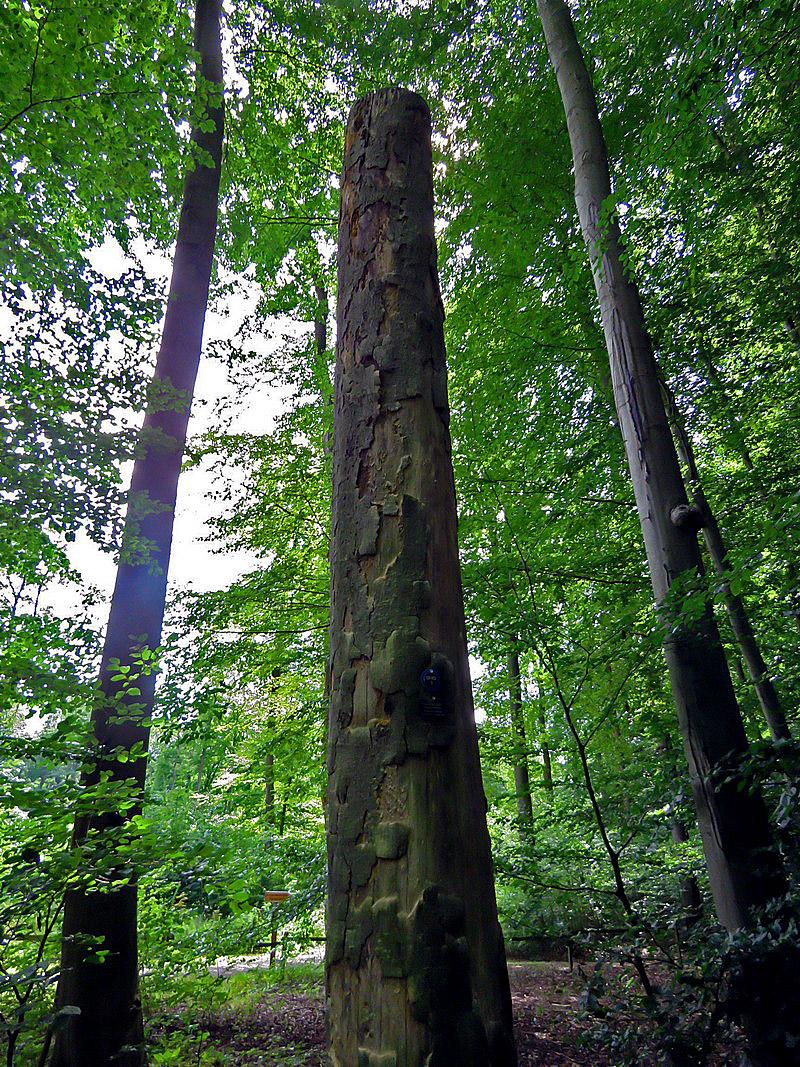 Auch ein wichtiger Habitatbaum: Totholz, ein abgestorbener Baumstamm