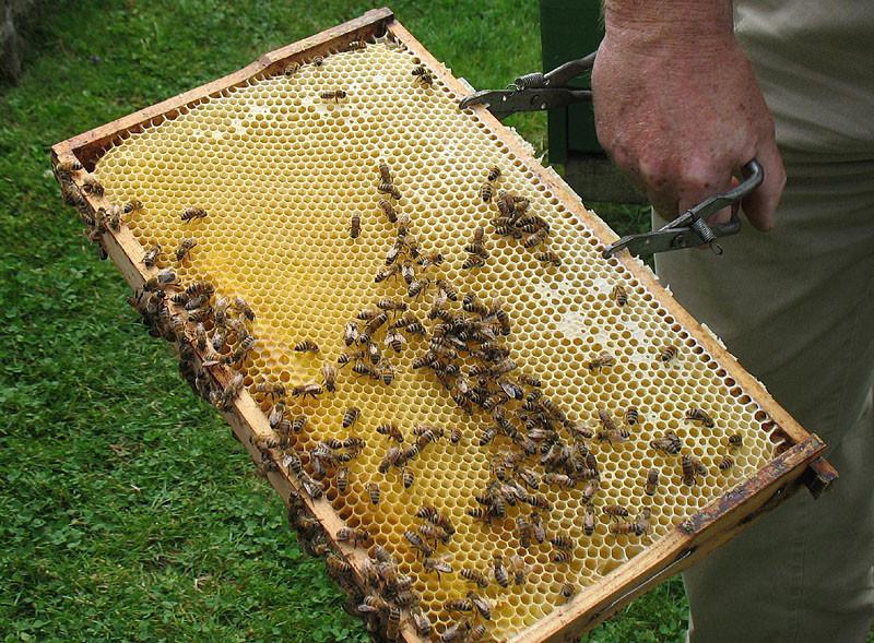 Hier sind Bienen bei der Arbeit