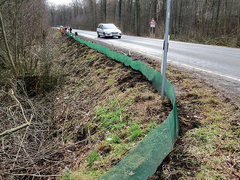 Die viel befahrene Straße durch den Wald wäre der sichere Tod für die Kröten