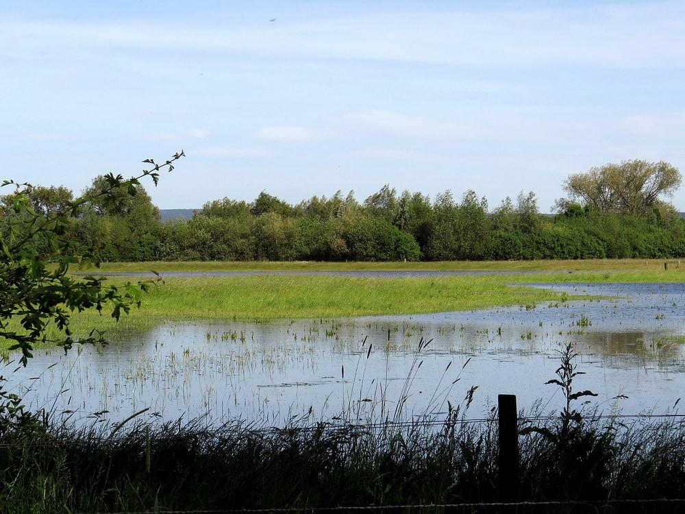 Überschwemmte Niederungswiesen