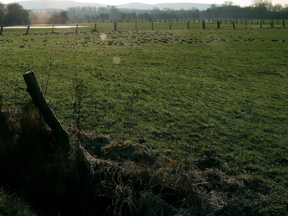 Herbstwiese mit Rauhreif