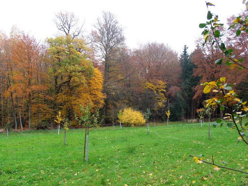 Im Herbst wurden letzte Säuberungsarbeiten auf unserer Streuobstwiese gemacht