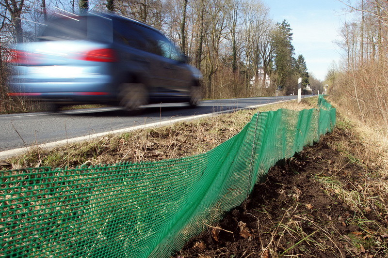 Den schnellen Autoverkehr würden die Kröten nicht überleben