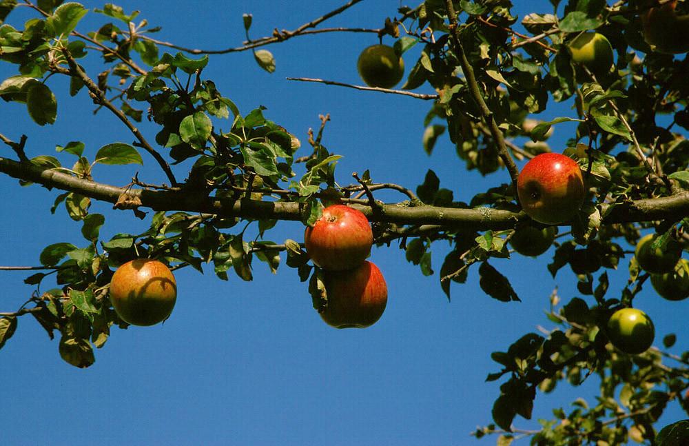 Das ist leckeres Obst, preiswert und garantiert öko!