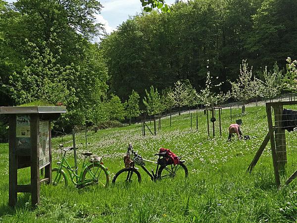 Diese Helfer auf der Streuobstwiese kamen ökologisch korrekt mit Fahrrädern.