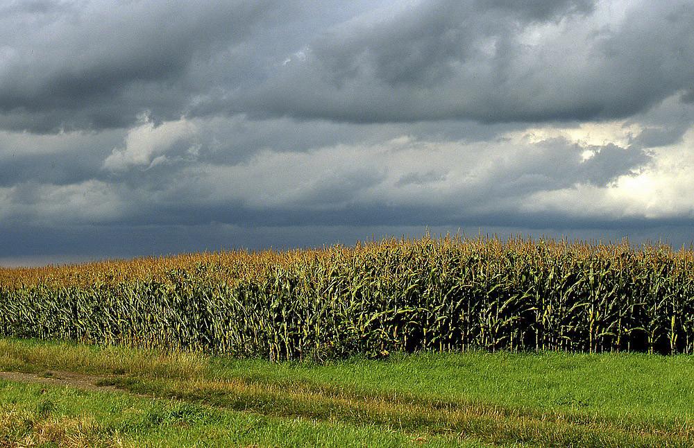 Herbstwolken über der Niederung
