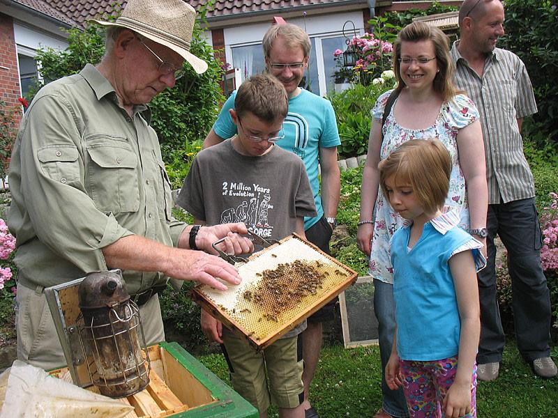Keine Angst: Die Bienen sind ganz friedlich, wenn man nicht nach ihnen schlägt
