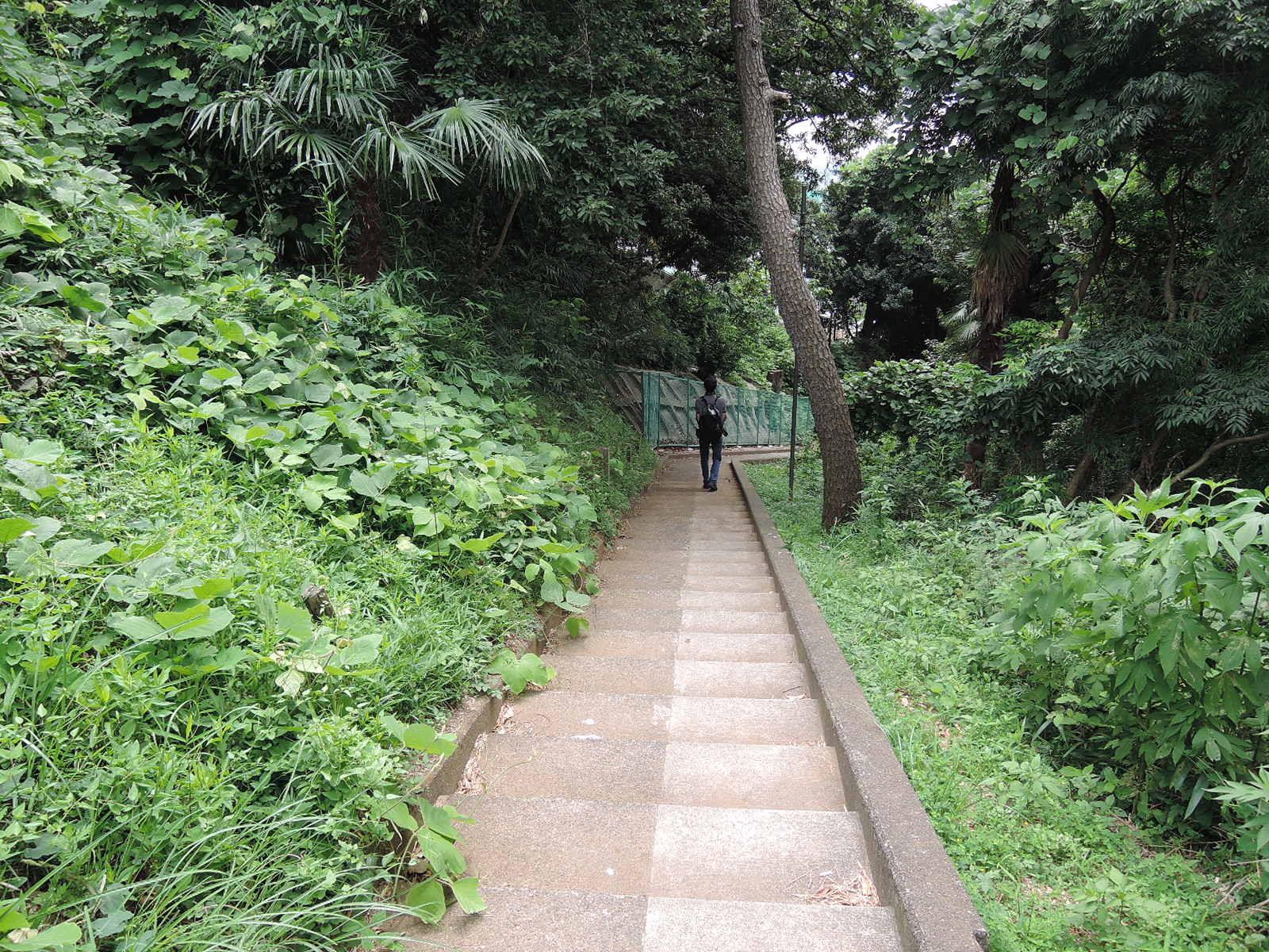 階段を下りて行きます
