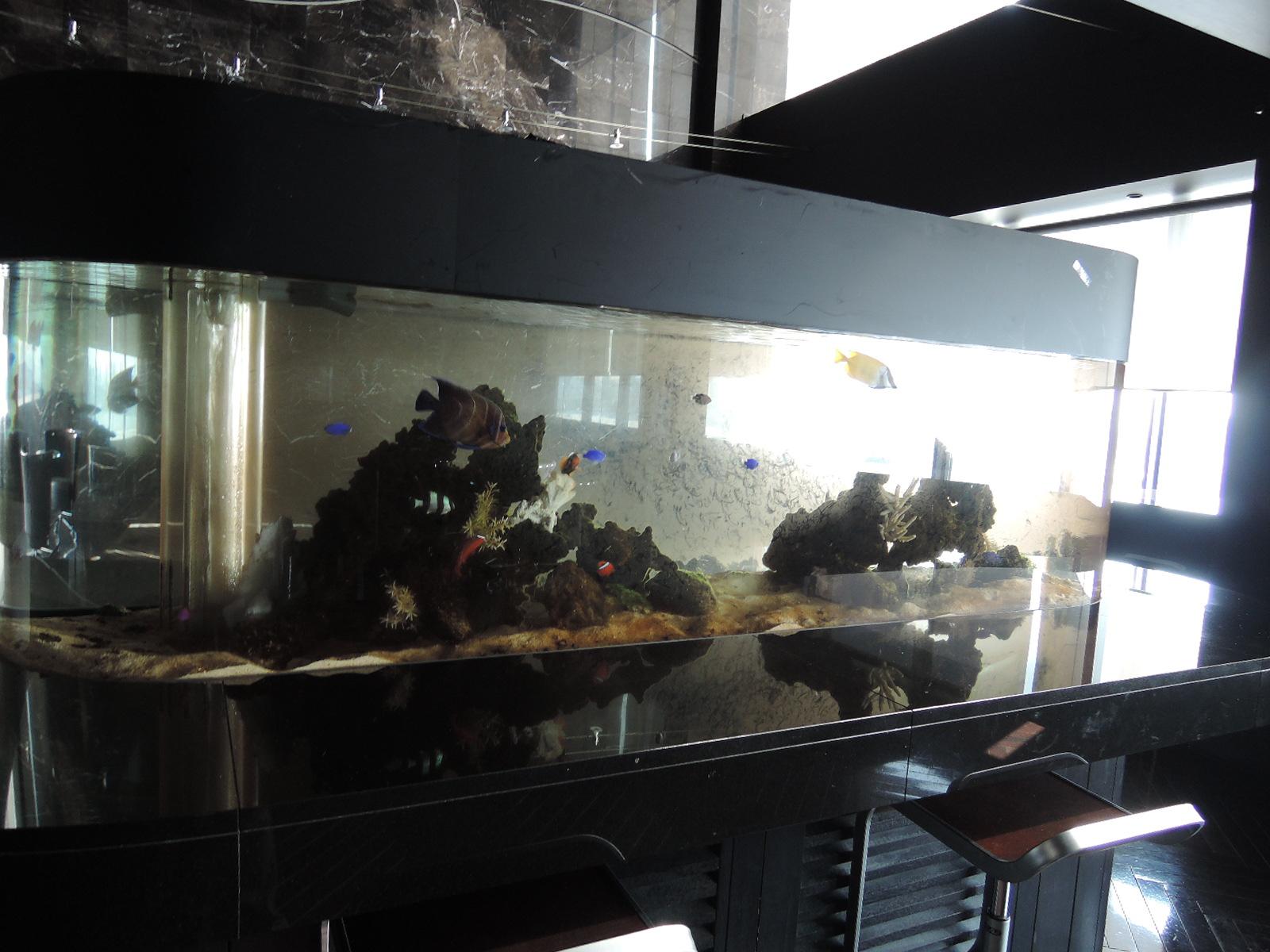 大きな水槽には熱帯魚が泳いでいます