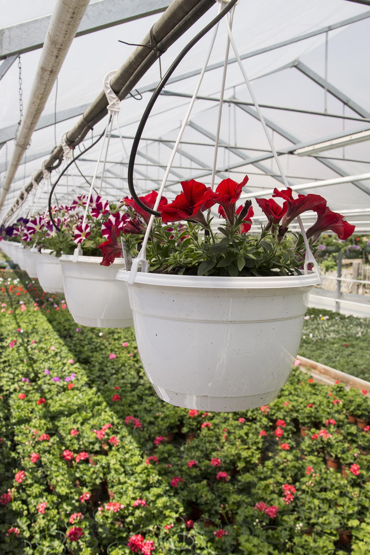 G rtnerei brautstrauss dresden webseite for Pflanzen lieferservice