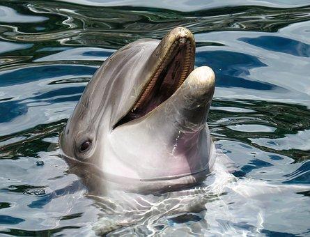 Absage Delfintherapie