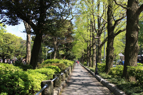 新緑の山下公園通り