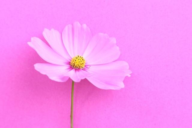 Fotografie-Wandbild Blüte