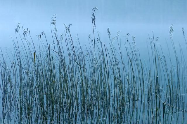 Fotografie-Wandbild Natur