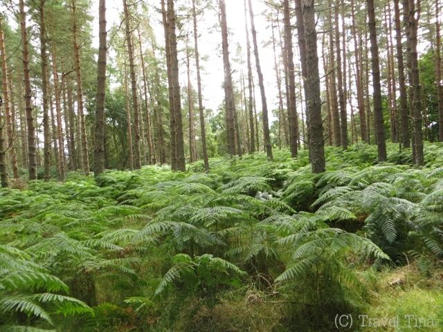 Wälder sind dort auf jeden Fall anders als bei uns.