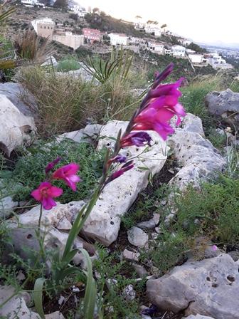 Noch einmal liebe Grüße an Teresa: Es hatte etwas von Conors Flower-Walk im Burren vor zwei Jahren.