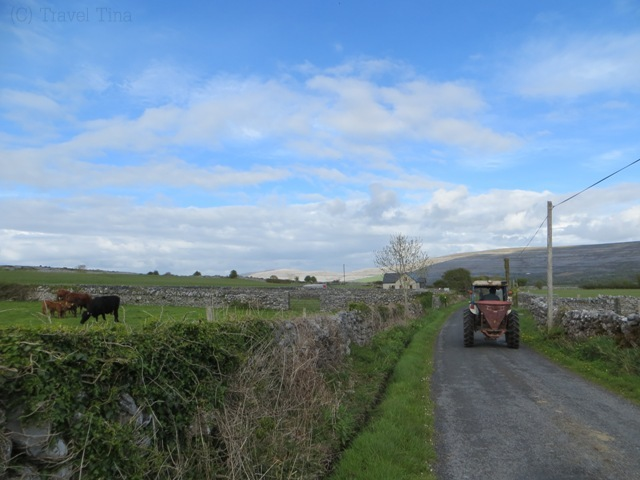 Farmlife in Ballyvaughan.