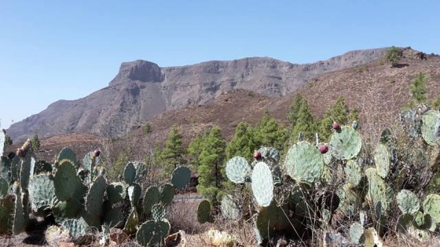 Canyon auf Gran Canaria.