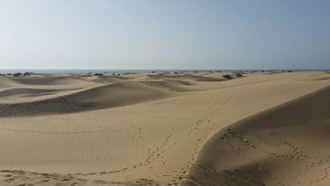 Wüstendünen Maspalomas/ Gran Canaria.
