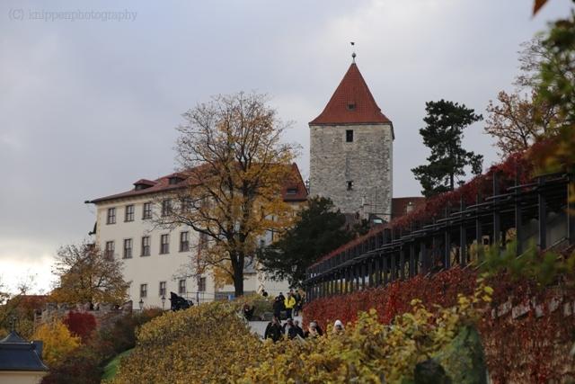 Der Weinhang am Fuße der Burg.