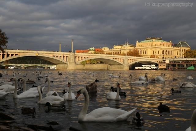 Vor allem im Abendlicht wird klar, weshalb Prag auch die goldene Stadt genannt wird.