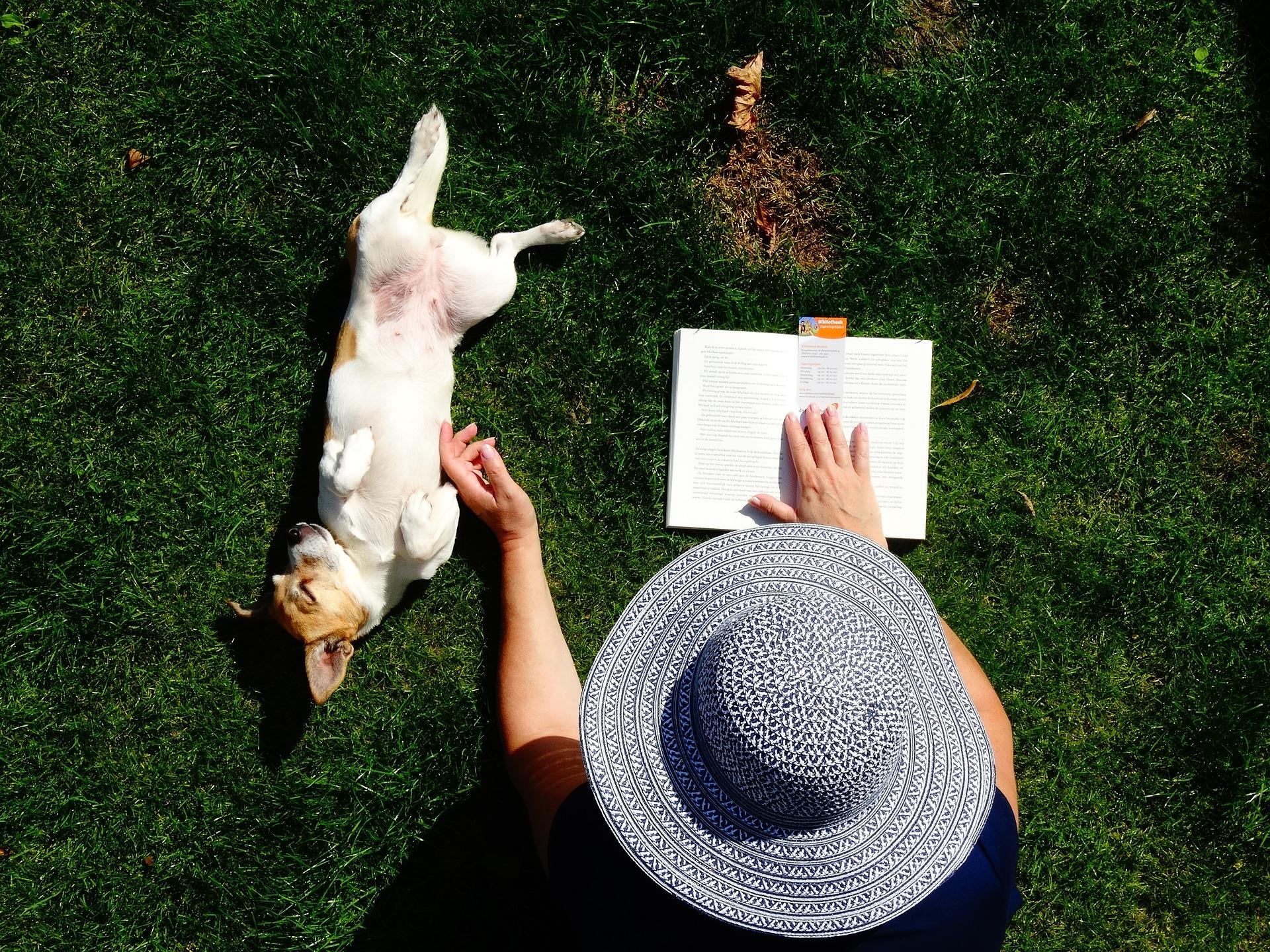7 Irrtümer rund um den Hund, die auch du kennst