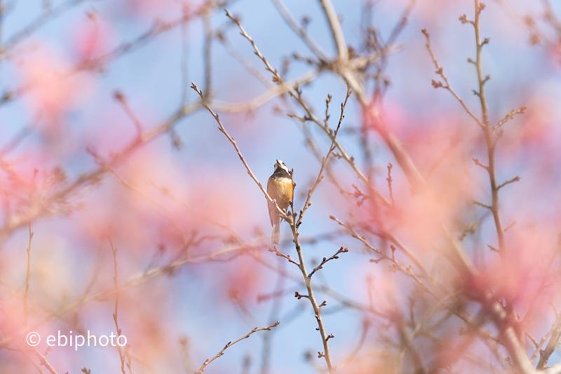 野鳥と奇跡の一本松