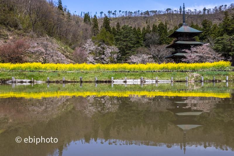 高畠町で春撮り