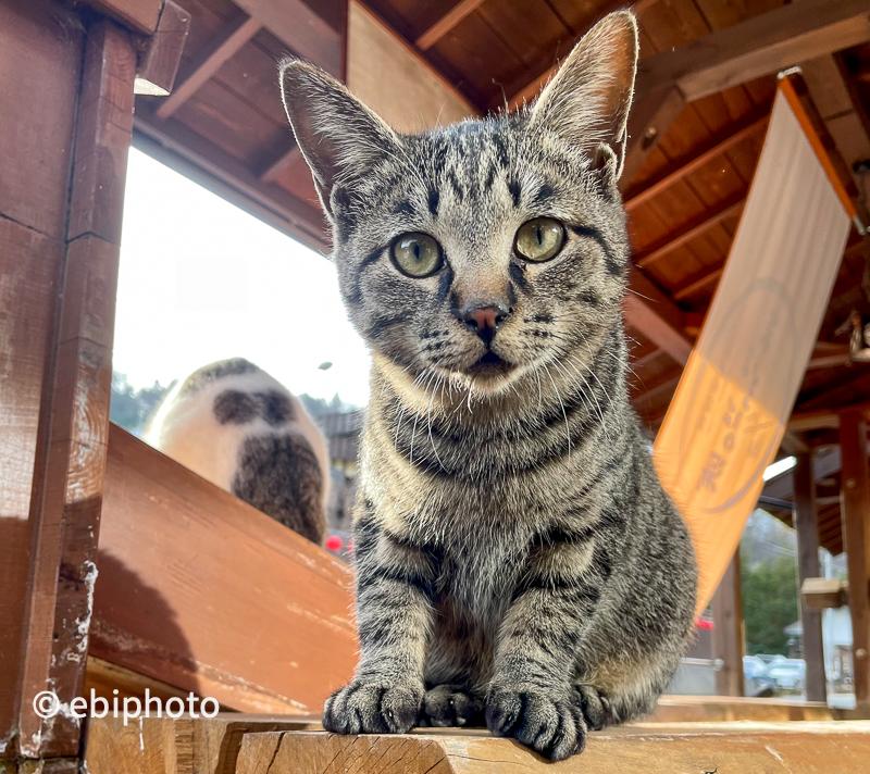 今日の一枚 温泉で出会った猫